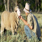 AWI aims to boost Merino wool demand, rower profitability in draft policy