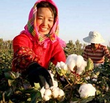 'China plays a major role in global cotton market': Peter Dong, Birla Jingwei Fibres