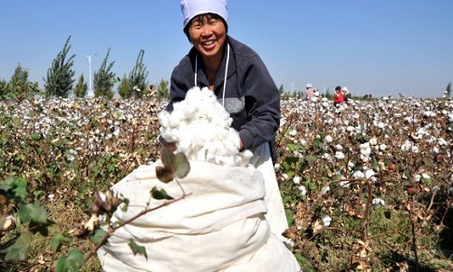 Global cotton production on rise NCC signals cautious