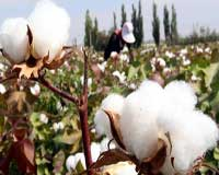 WTO members deliberate on cotton expanse