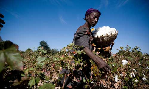WTO members deliberate on cotton