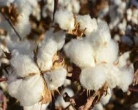 China to emerge a strong cotton importer once more