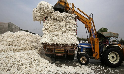Cotton import export to see a sudden shift amid US China trade war 001