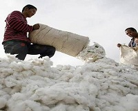 US cotton most preferred by mills, manufacturers across the world: Study