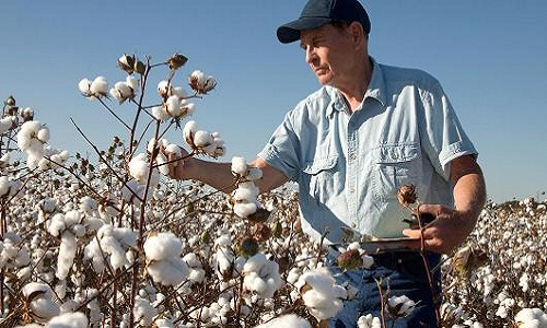 CCI making efforts to promote US grown cotton